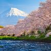 Fuji and Sakura. At river in the morning Stock Photo