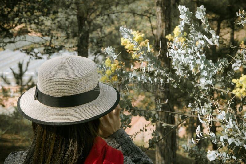  à DE Ä ¡T, mimosa de LẠde Hoa imágenes de archivo libres de regalías