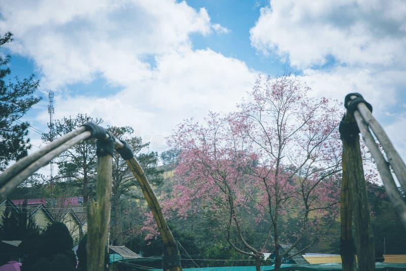  à DE Ä ¡T, Sakura vietnamita de LẠfoto de archivo libre de regalías