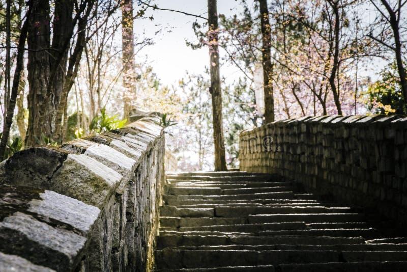  à DE Ä ¡T, Sakura vietnamita de LẠimagenes de archivo