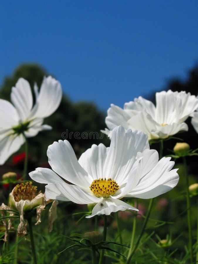 Download ¡Belleza de la naturaleza! imagen de archivo. Imagen de perfecto - 180319
