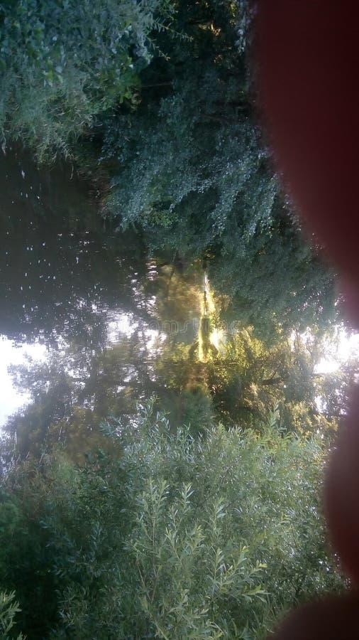 ¡Del hlubokà del verano del bosque del perro de la sonrisa imágenes de archivo libres de regalías