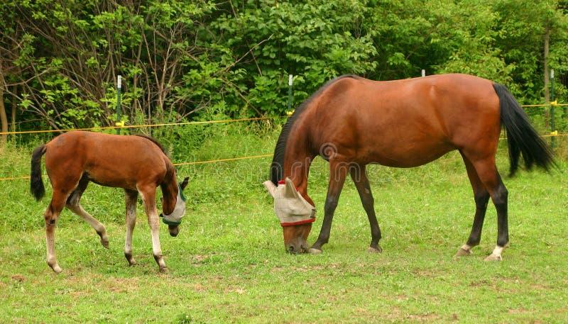 Download ¡La Familia Que Pasta Junta, Permanece Junta! Imagen de archivo - Imagen de mamífero, caballo: 188805