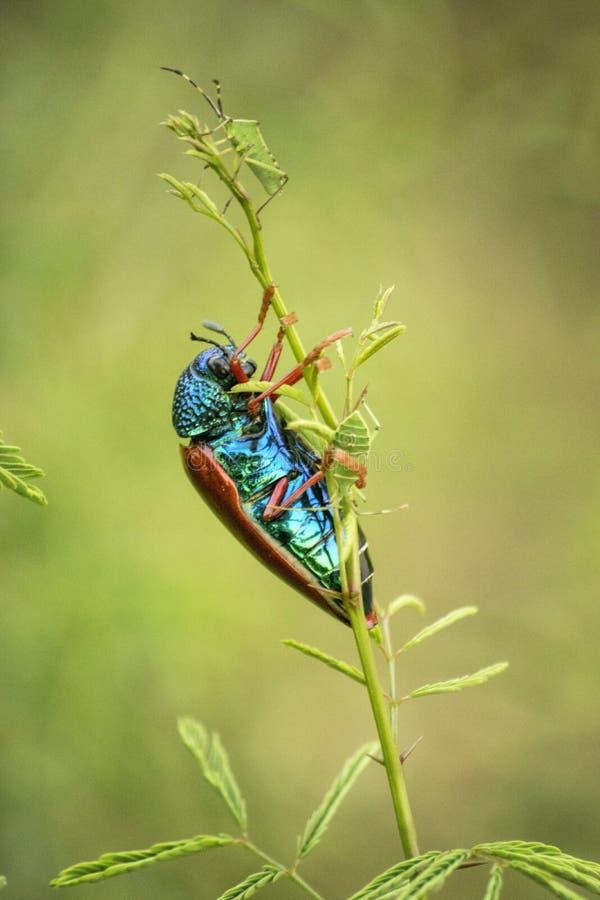 ¡Nada es belleza que la naturaleza y la fauna! fotos de archivo