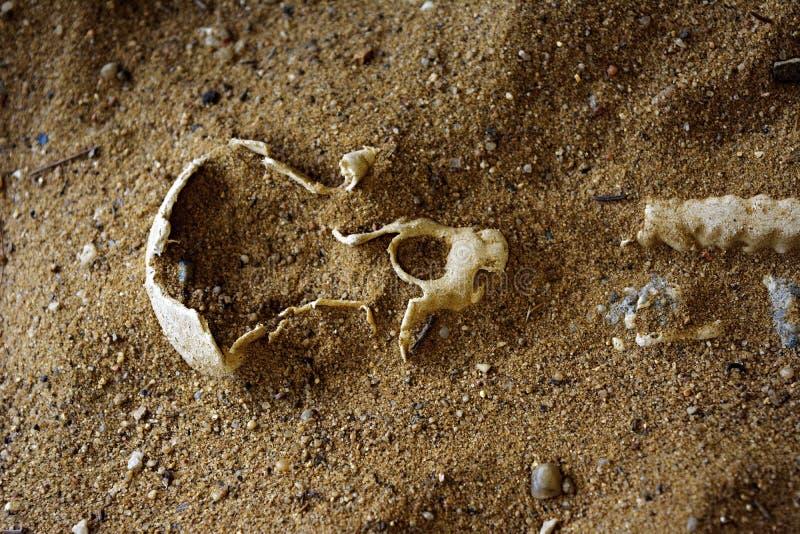 ¡Parque de la diversión del ` s de los niños - sea el arqueólogo! ¡Deja el juego! foto de archivo libre de regalías