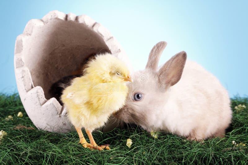 ¡Pollo y conejo de Pascua! imágenes de archivo libres de regalías