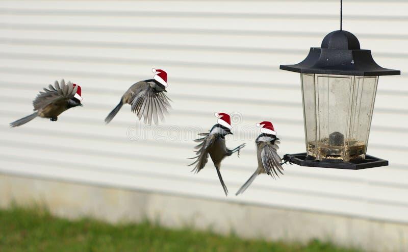 ¡Santa que se divierte la Navidad!! foto de archivo