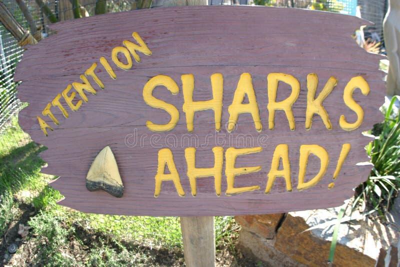 ¡Tiburones A Continuación! Imagenes de archivo
