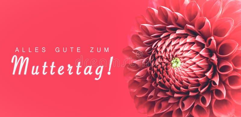 ¡Zum Muttertag de Alles Gute! texto en alemán: ¡Día feliz del ` s de las madres! y la flor rosada de la dalia detalla la foto mac imagen de archivo libre de regalías