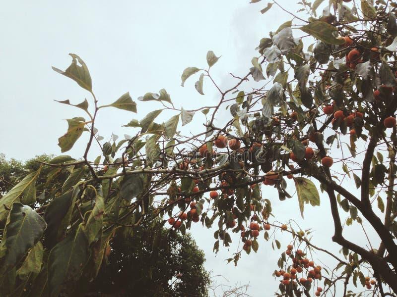 ¼ ŒJoy di Autumn Harvestï del giorno di autunno di ŒBeautiful del ¼ del laborï immagini stock libere da diritti