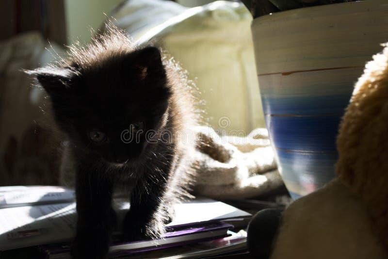 ¾ к/gatito del ½ Ð del ` Ð del 'Ñ del ¾ Ñ de КРfotos de archivo libres de regalías