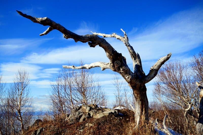 ¾ del ² Ð dell'albero/Ð'Ð?Ñ€Ð?Ð fotografia stock libera da diritti