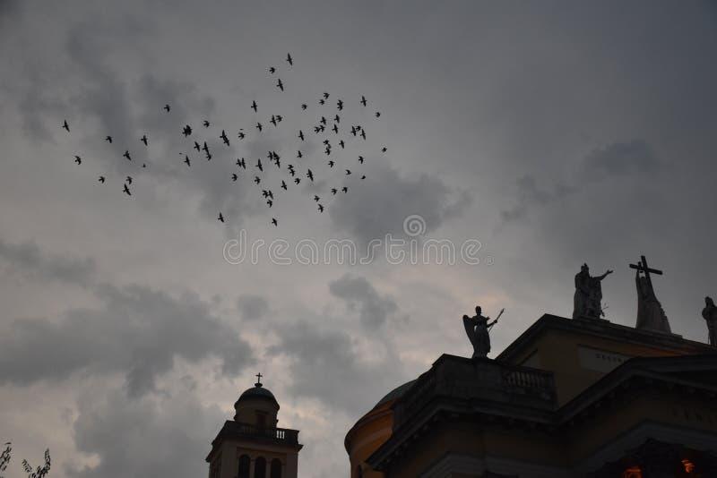 ¿Nunca más o apenas algunos pájaros? imagenes de archivo