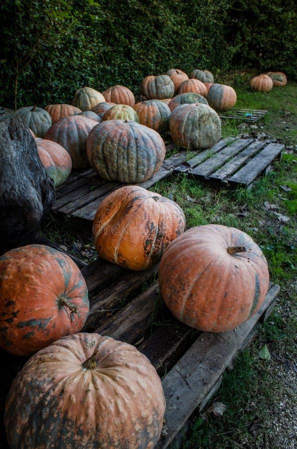 ¿Usted tuvo gusto de Halloween? fotos de archivo