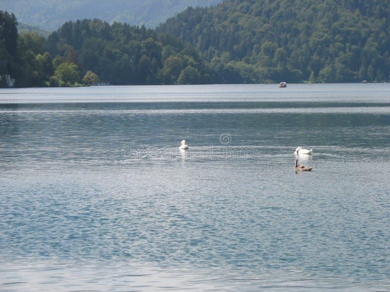 ×schöne Seen stockfoto