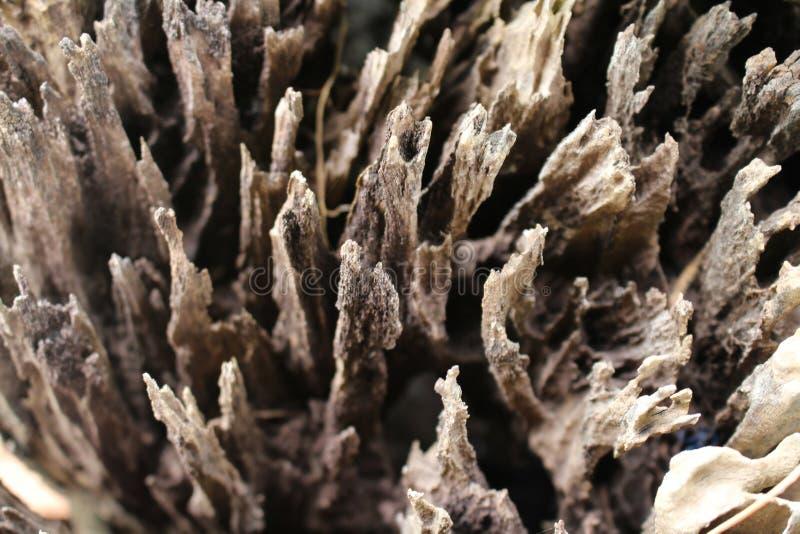 ื自然有创造性的艺术,干燥树有艺术 库存照片