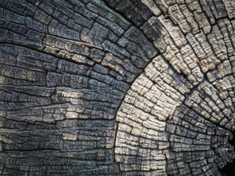 ฺBeautiful裁减树桩被构造的和背景 图库摄影