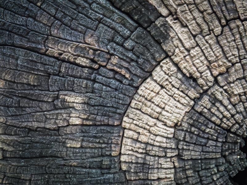 ฺBeautiful Schnittbaumstumpf gemasert und Hintergrund stockfotografie