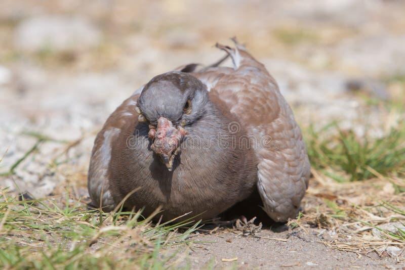 à¸'bird arkivfoto