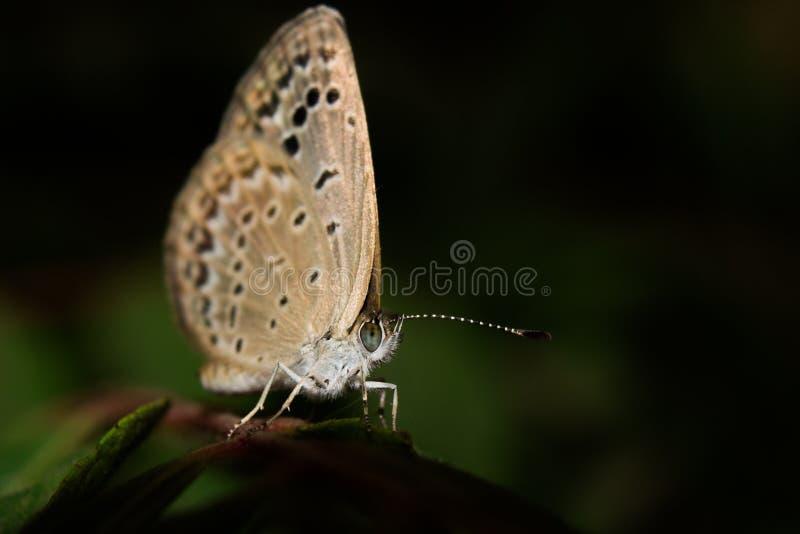 ฺButterfly arkivfoton