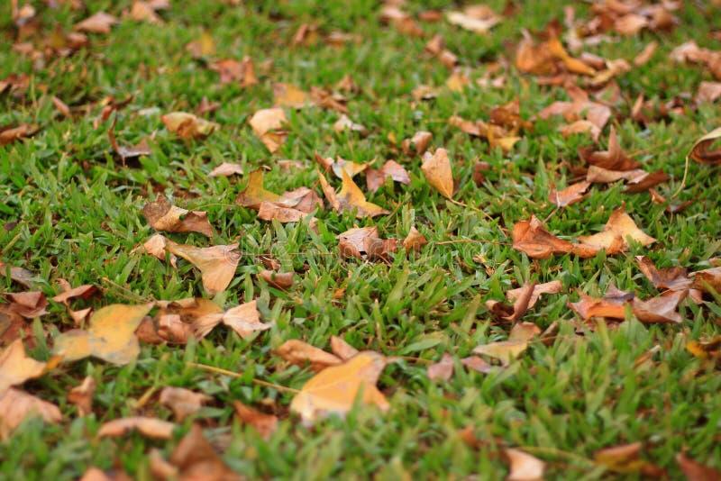 À feuilles caduques photographie stock libre de droits