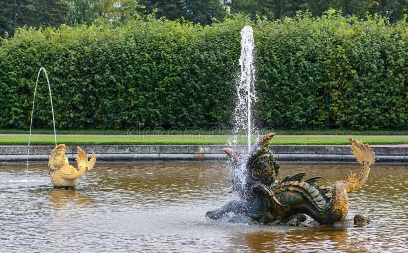 À l'entrée au parc supérieur de Peterhof, au sud de Neptune, il y a une piscine ronde décorée des sculptures en bronze d'un drago photographie stock libre de droits