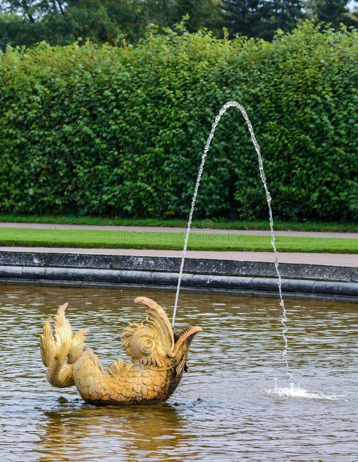 À l'entrée au parc supérieur de Peterhof, au sud de Neptune, il y a une piscine ronde décorée des sculptures en bronze d'un drago images stock