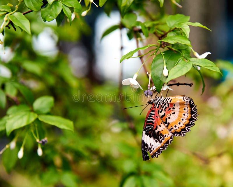 À l'envers été perché beau par papillon sur une feuille images stock