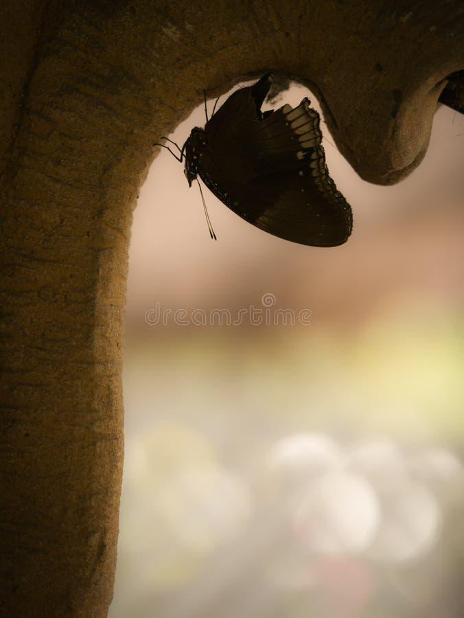 À l'envers été perché par papillon noir images stock