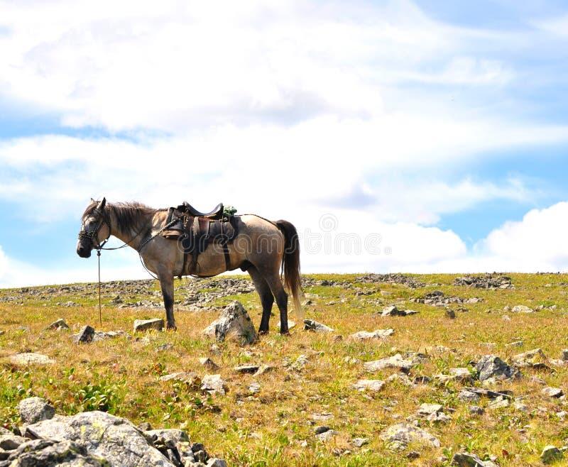 À l'extérieur conduit le cheval image libre de droits