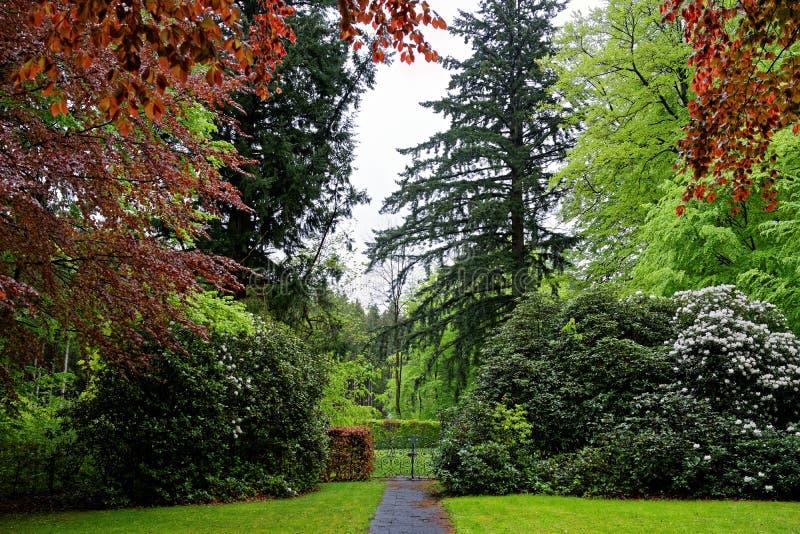 ? l'int?rieur d'un paysage luxuriant de parc au jour pluvieux au printemps photos libres de droits