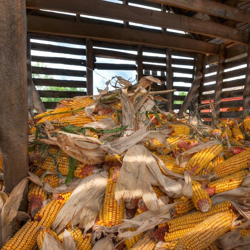 À l'intérieur de la huche de maïs image libre de droits
