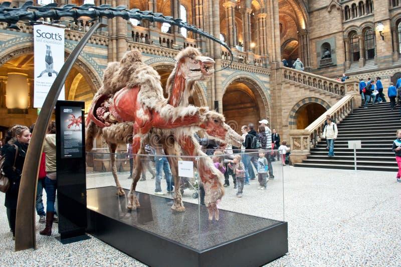 À l'intérieur du musée d'histoire naturelle photo stock