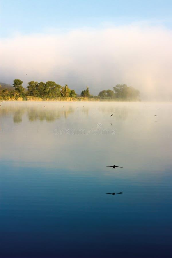 À superfície da àgua rápido foto de stock royalty free
