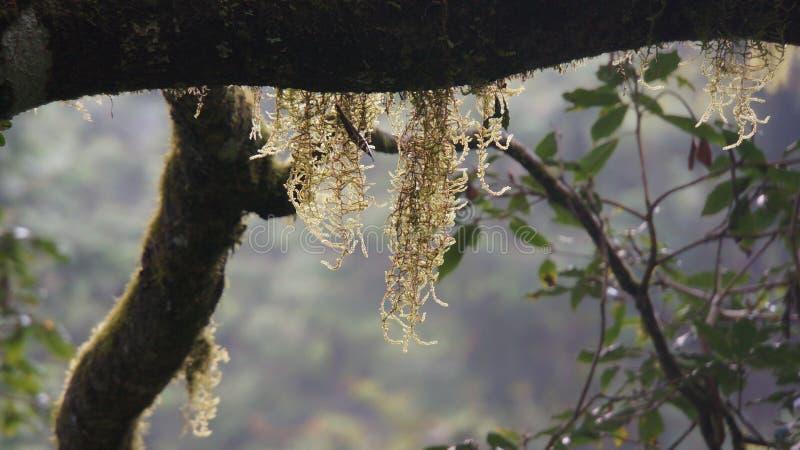 À une forêt sur la haute montagne à Taïwan image libre de droits