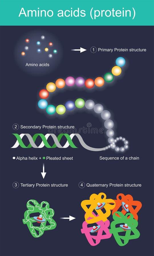 Ácidos aminados proteína ilustração royalty free