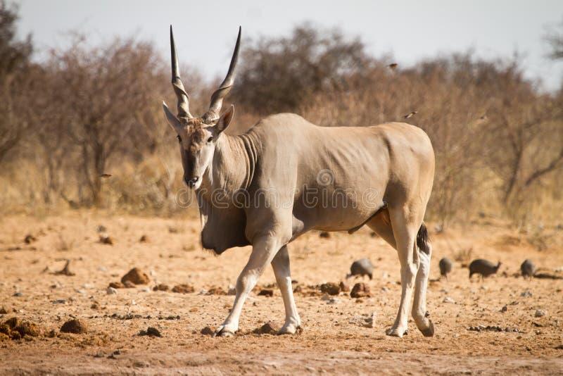 África foto de archivo libre de regalías