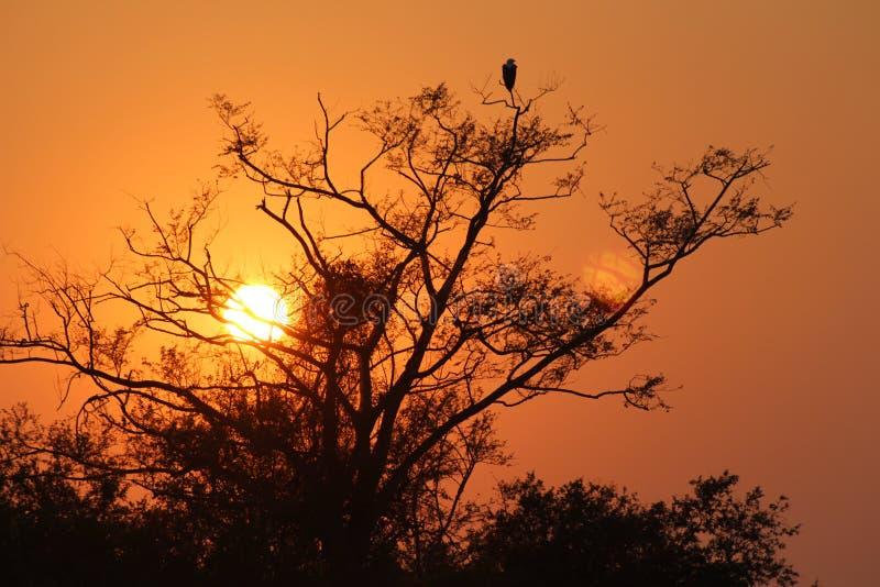 África - Sunrise - Zâmbia ilustração do vetor