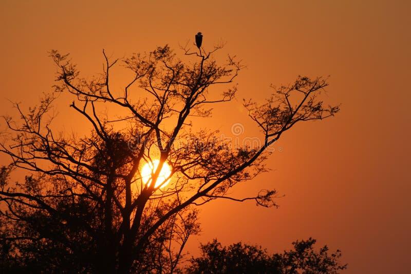 África - Sunrise - Zâmbia ilustração stock