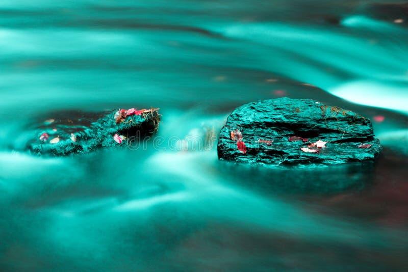 A água apedreja as folhas foto de stock royalty free