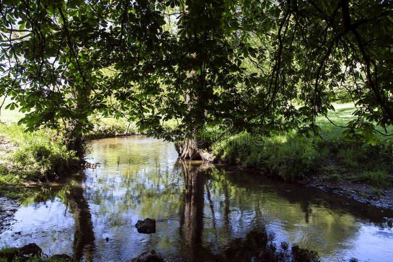 Água clara bonita do córrego defluxo com o Eifel em Alemanha fotos de stock royalty free
