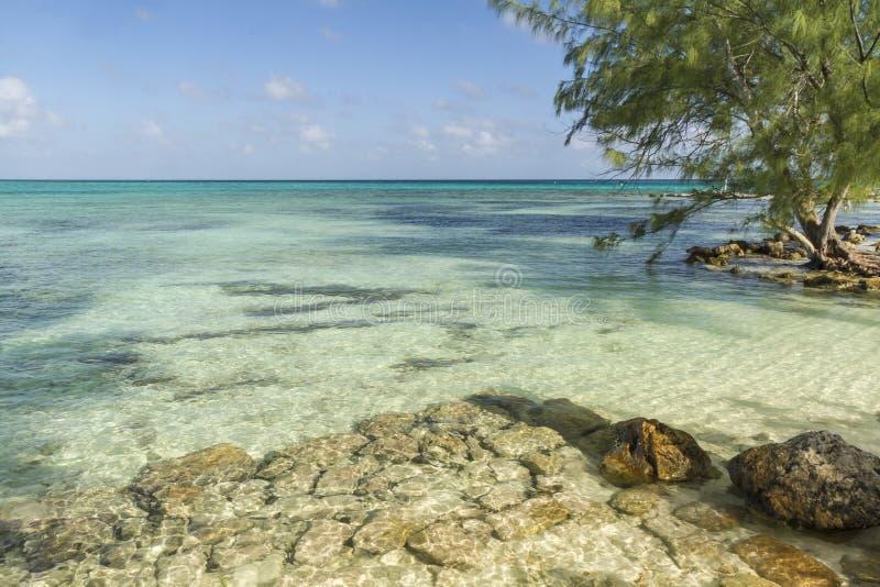 Água clara do caimão imagem de stock