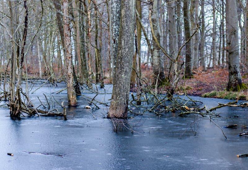 Água congelada nas madeiras imagens de stock