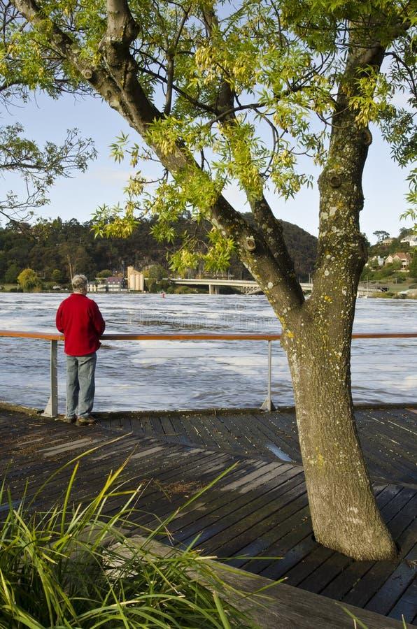 Água da enchente de observação do homem, Launceston, Tasmânia imagem de stock royalty free