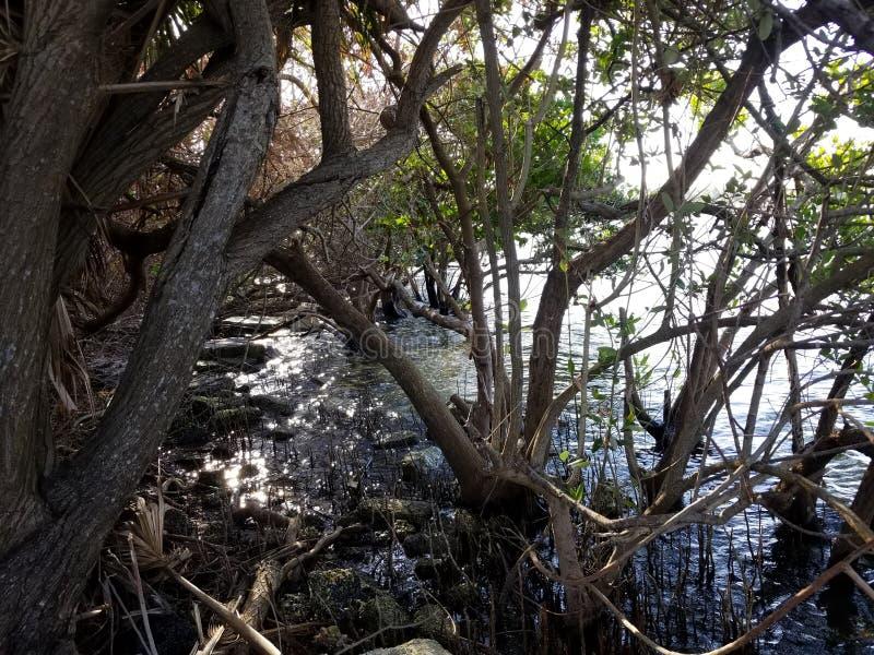 Água das árvores fotos de stock