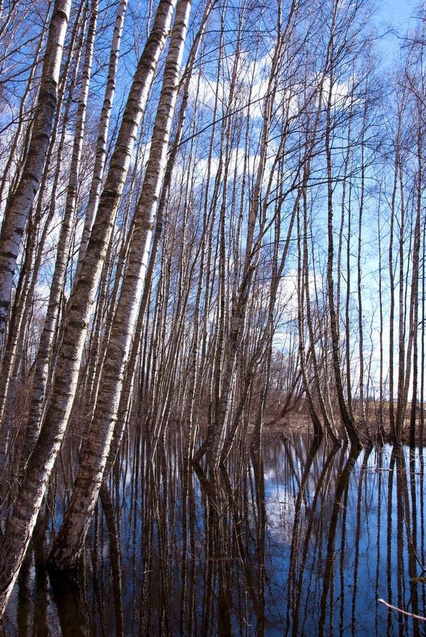 Água de mola na floresta fotografia de stock
