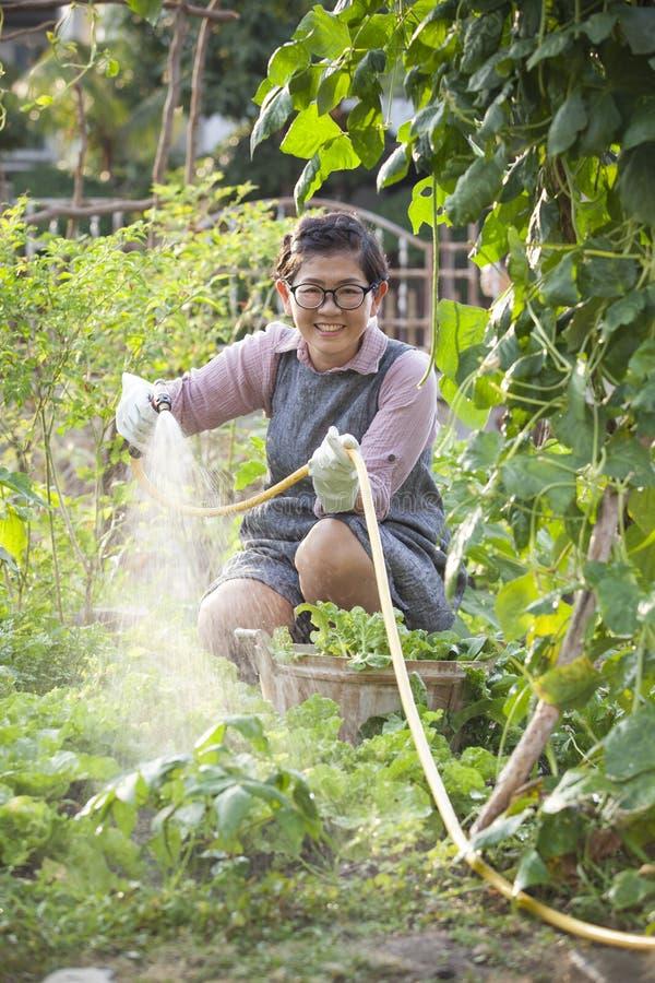 Água de relaxamento da mulher asiática que derrama no jardim vegetal home fotos de stock royalty free