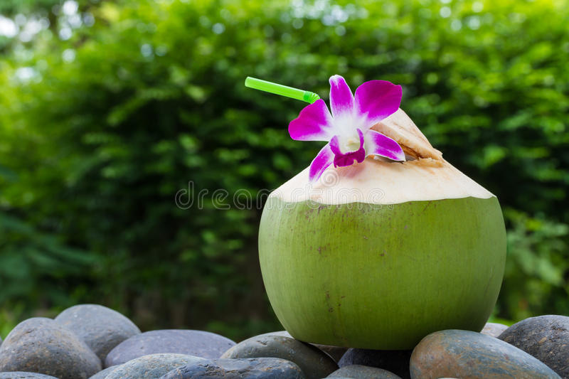 Água do coco do serviço e decoração da flor da orquídea foto de stock royalty free