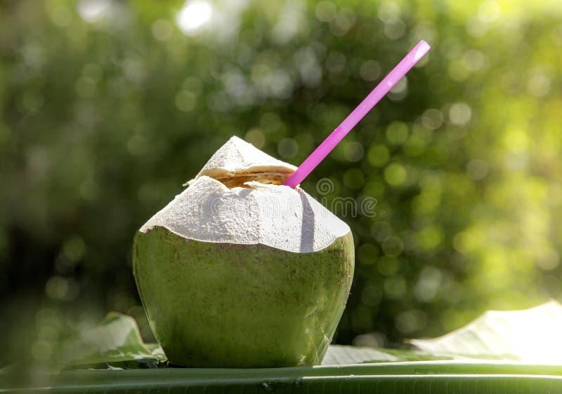 Água do coco na praia, colocada em uma folha da banana, com uma árvore de coco borrada no fundo É um bokeh verde imagem de stock