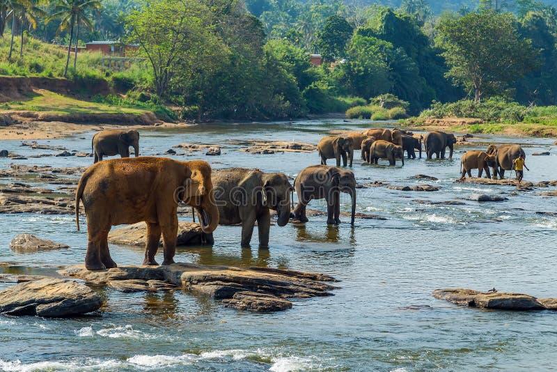água do elefante da selva Beleza da floresta ?mida tropical do fundo da natureza com animal selvagem imagens de stock